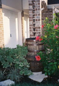 Authentic Southern Kentucky Whiskey Rain Barrels And Water